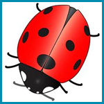 Bugs and Insects Lesson Plans for Preschool, PreK, and Kindergarten