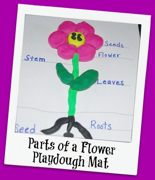 Parts of a Flower Playdough Mat Activity for Preschool