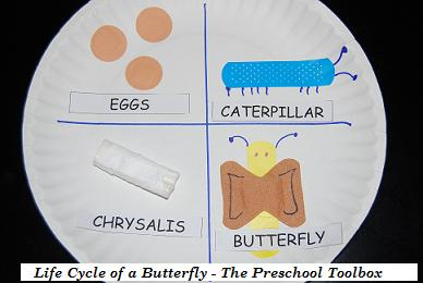 "Transforming Preschool ""BAND AID"" love into a Butterfly's Life Cycle!"