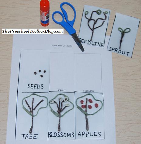 Apple Tree Life Cycle for an Apples Theme in Preschool and Kindergarten