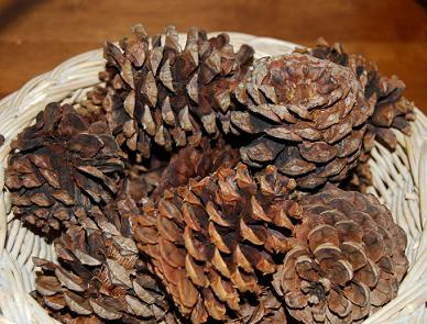 Pinecone Craft 001