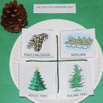 Life Cycle of a Christmas Tree 001