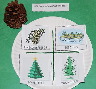 Life Cycle of a Christmas Tree Craft for Preschool!