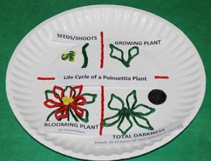 Wikki Stix Poinsettia Life Cycle_Crafts 008
