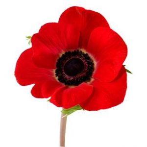 History of the Memorial Poppy