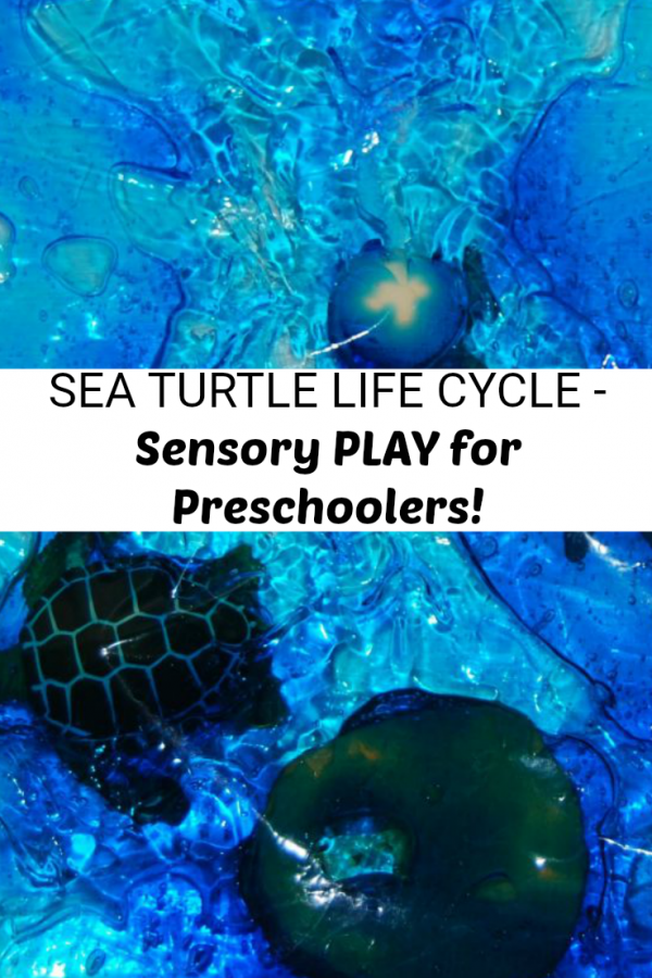 Ocean Theme Activities for Preschool: Sea Turtle Life Cycle & Sensory Bags