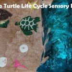 Sea Turtle Life Cycle Sensory Bin