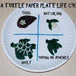 Sea Turtle Paper Plate Craft #2