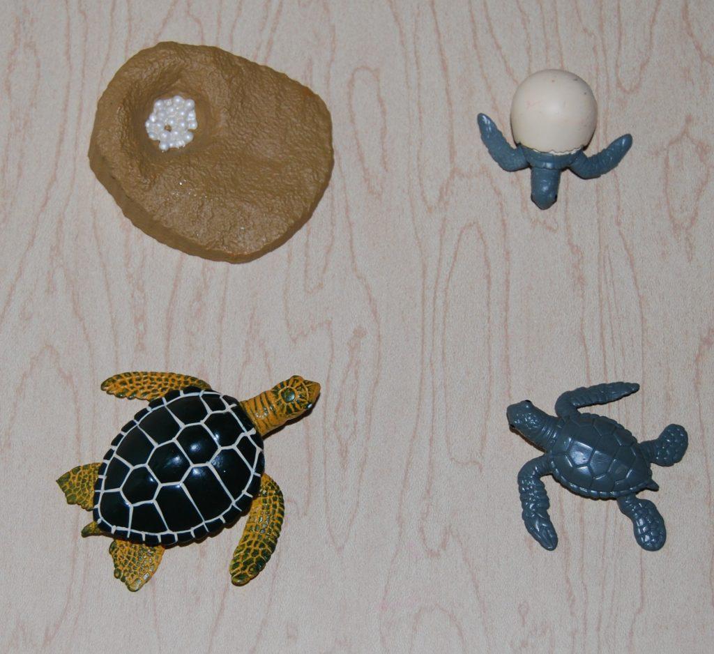 Sea Turtle Post 018