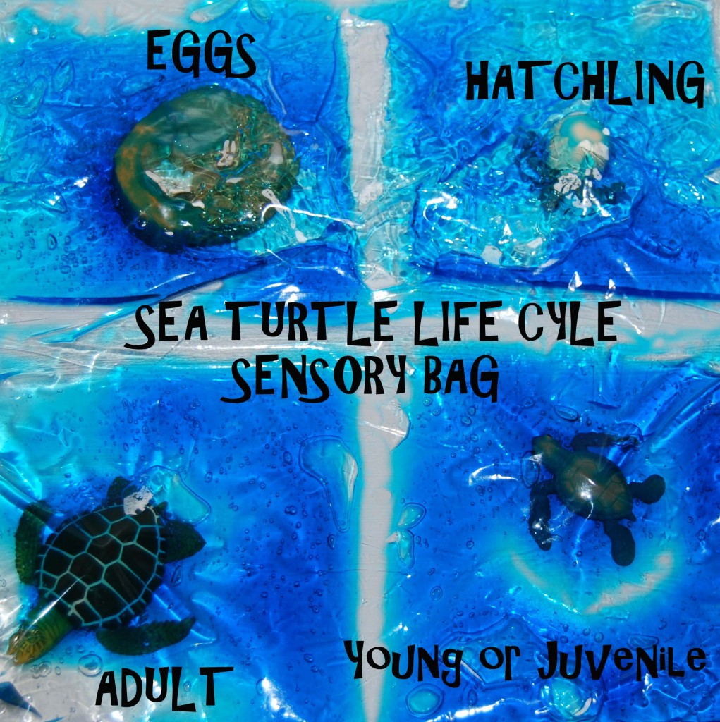 Sea Turtle Sensory Bag