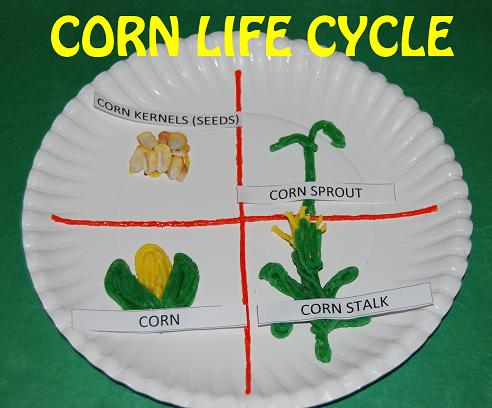 Corn Life Cycle Paper Plate Craft