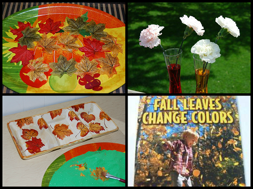 Why Do Fall Leaves Change Colors? #PlayfulPreschool