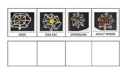 Spider Life Cycle Sequencing Cards for Preschool