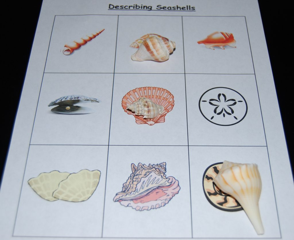 Describing Seashells