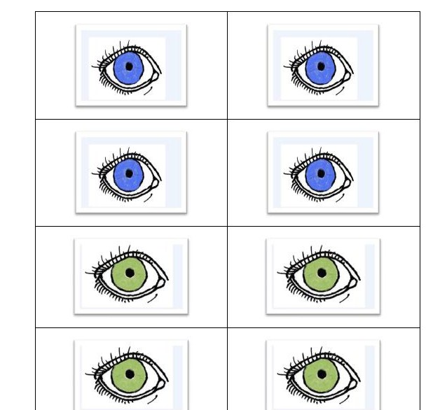 Eye Colors Explorations in Preschool