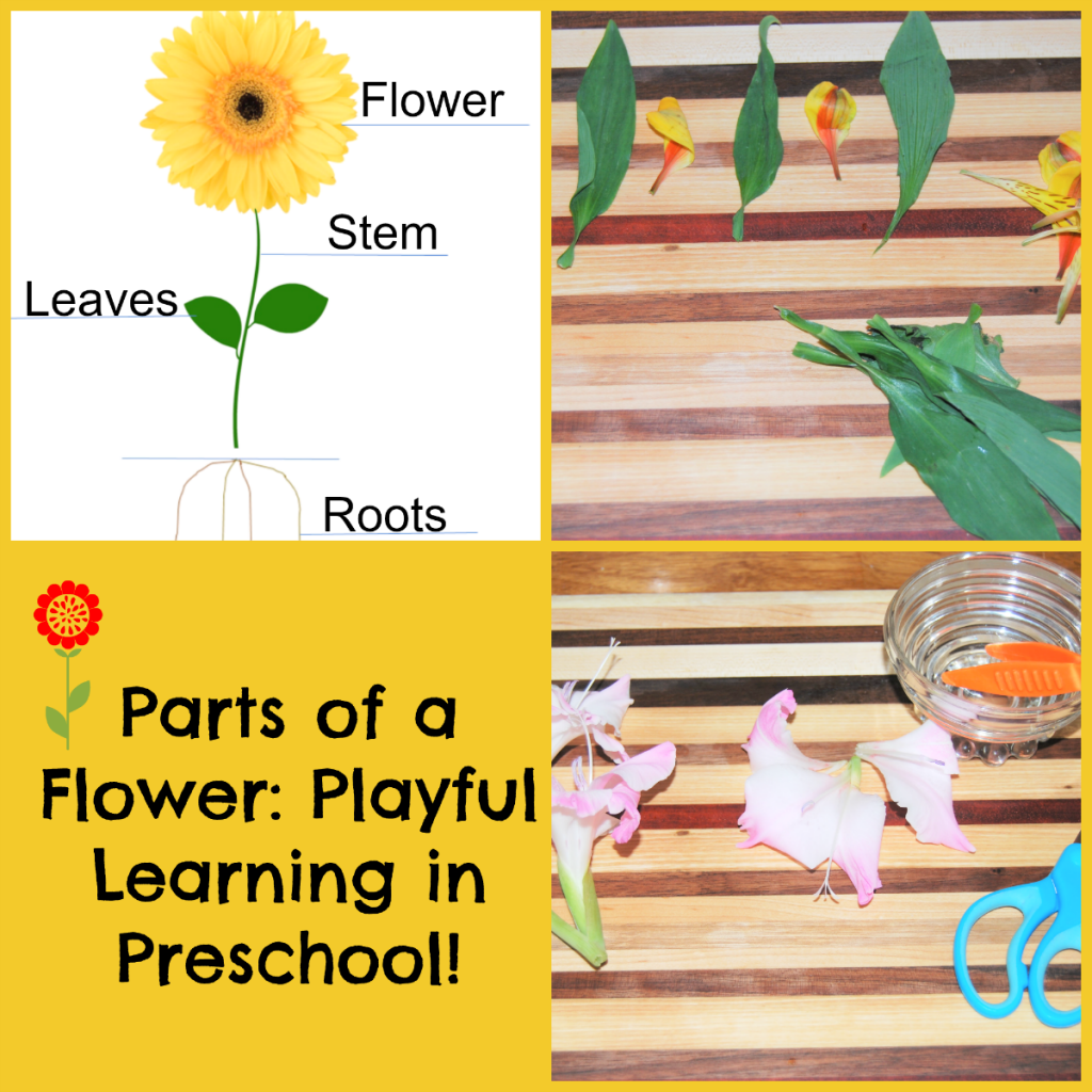 Parts Of A Flower Playful Learning Flower Centers For Preschoolers