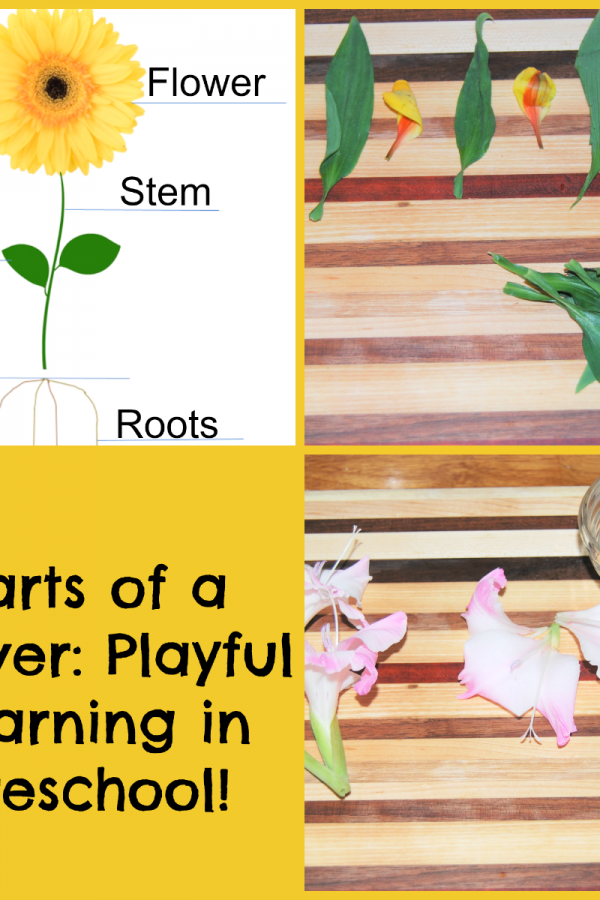 Parts of a Flower: Playful Learning Flower Centers for Preschoolers!