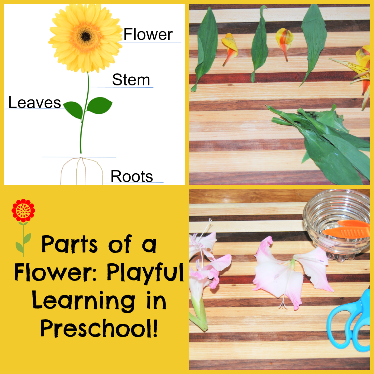 Parts Of A Flower: Playful Learning Flower Centers For