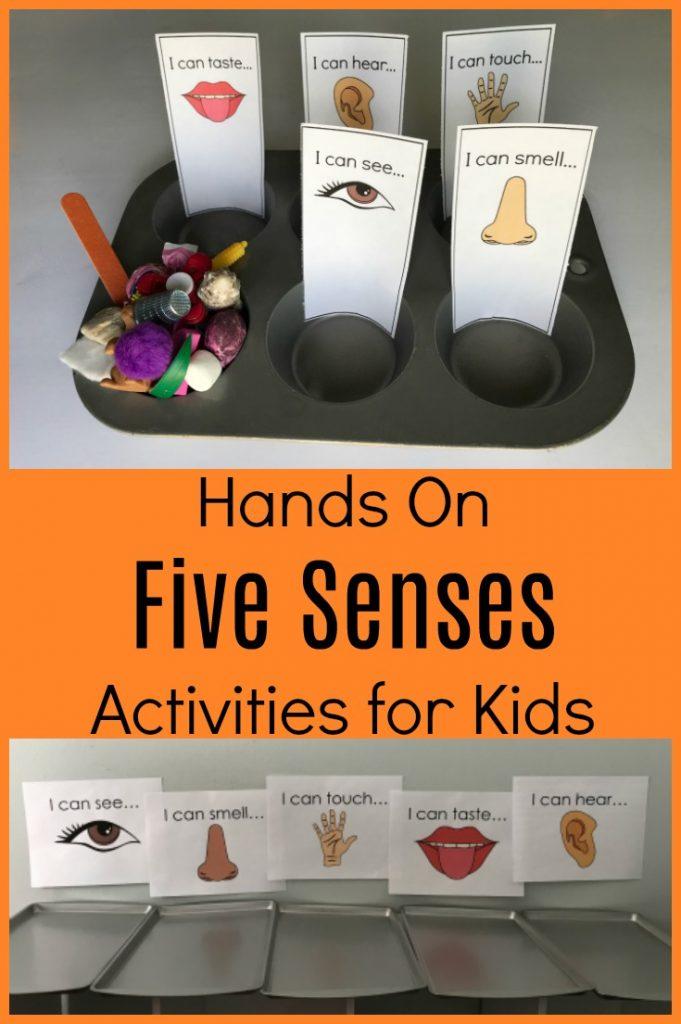 Exploring all 5 Senses in Preschool Sorting Activities