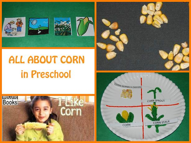 All about corn in preschool